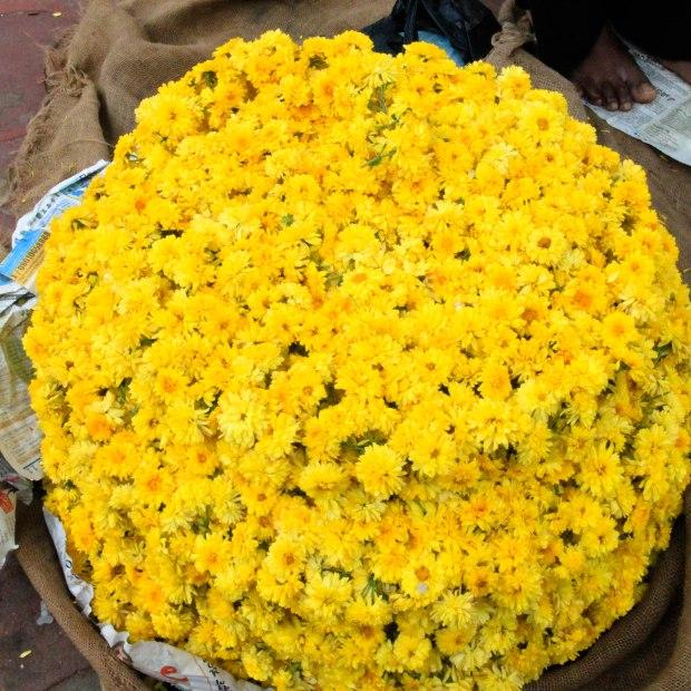 Les chrysanthèmes jaunes symbolisent la longévité et la joie. C'est une fleur noble en Inde.