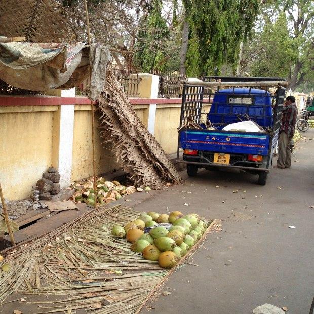 Un beau camion bleu électrique qui décharge des coconuts.