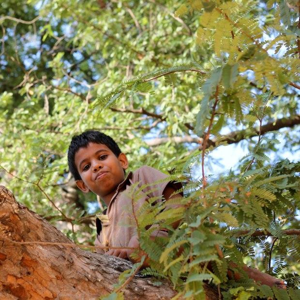 Jouer dans les arbres