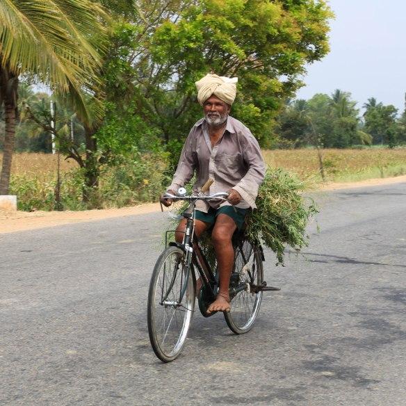 Le beau vélo qui transporte l'herbe pour les poules ou les vaches!