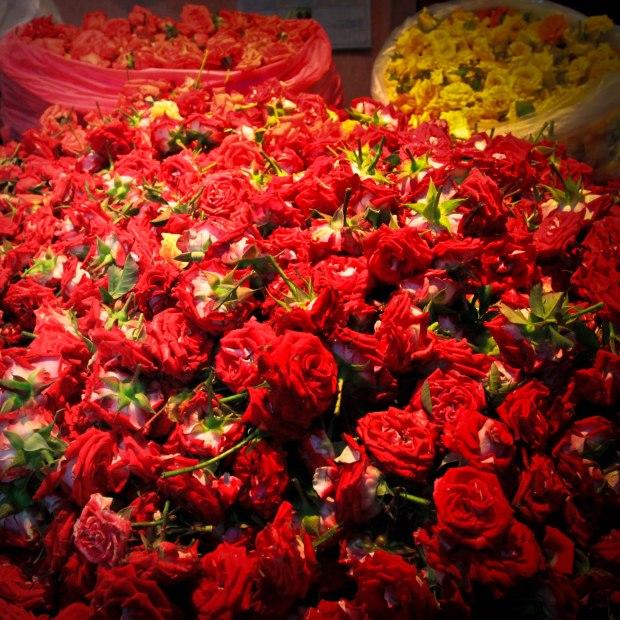 Tètes de roses. Les fleurs en tiges ne se vendent que rarement chez certains fleuristes spécialisés.
