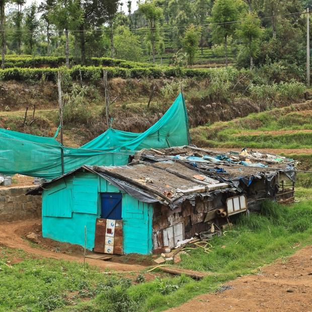 Vert-turquoise, fouillis ordinaire. Je pense que dans cette jolie maison au milieu des plantations de thé, on peut tout trouver.