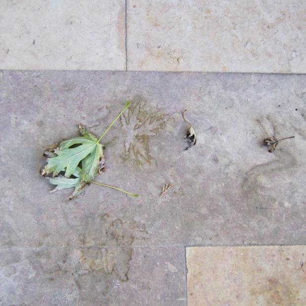 Empreinte de feuilles sur le sol d'Avignon