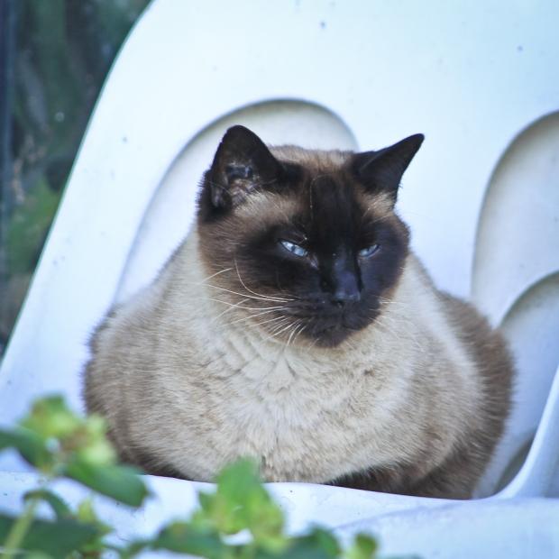 Le chat veille à Vic La Gardiole