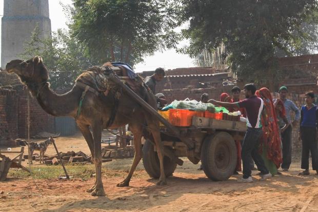 Dans une briqueterie en Inde,  IMG_9481-1