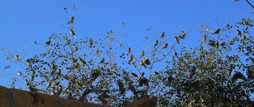 Birds à Jaisalmer