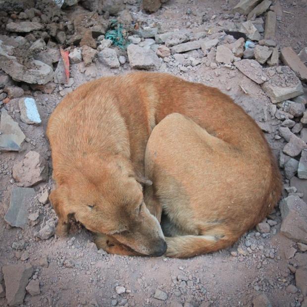 Dog  IMG_0672-1