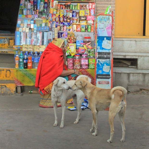 Dog  Pushkar IMG_4357-1