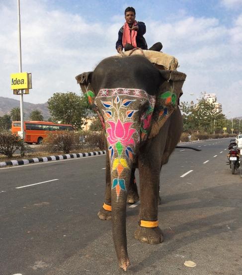 Elephant Jaïpur  IMG_9791-1