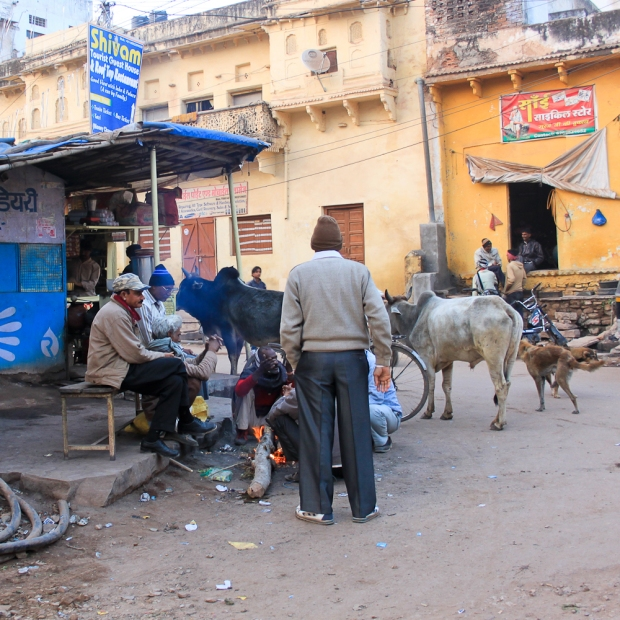 Holy cow  à Udaipur IMG_3333-1