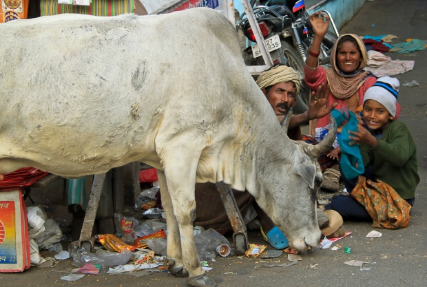 Holy cow  IMG_2715-1