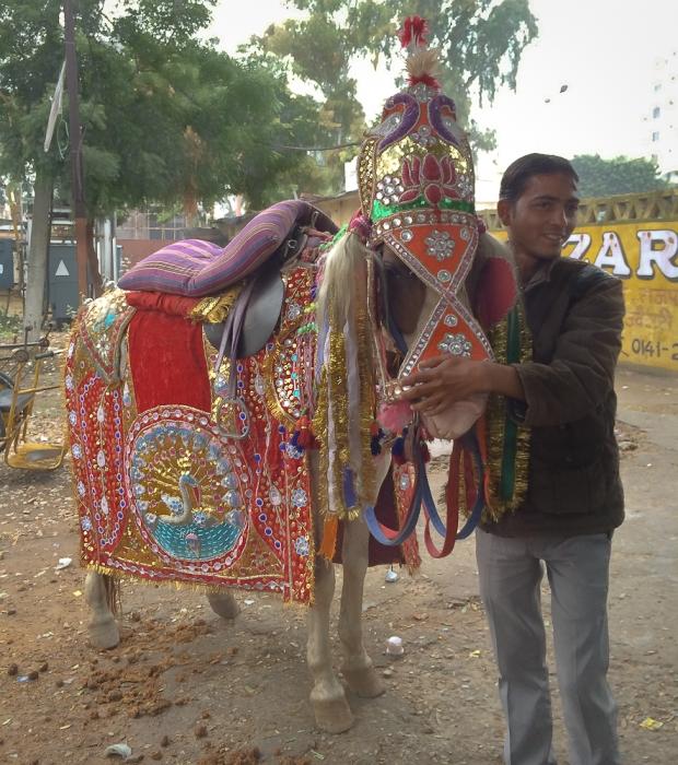 Horse Jaipur  IMG_9910-1