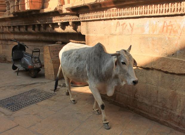Jaisalmer IMG_1209-1