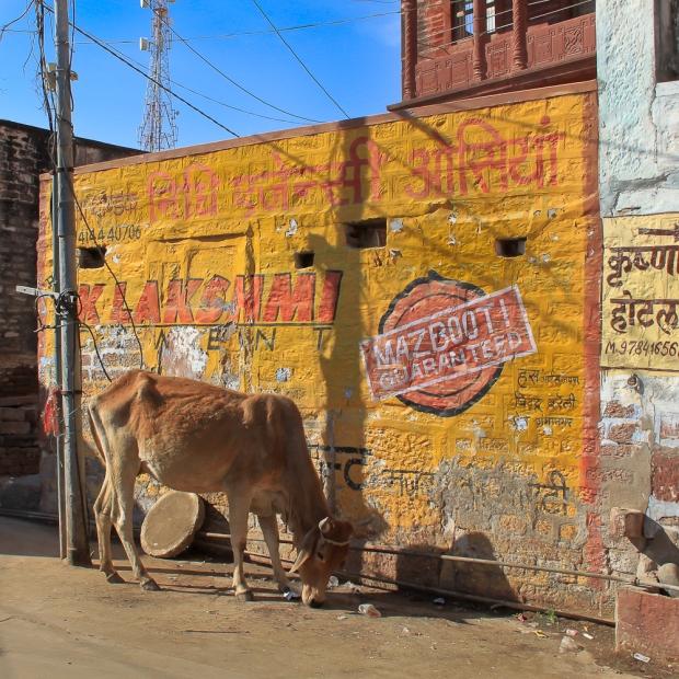 Jodhpur IMG_1770-1
