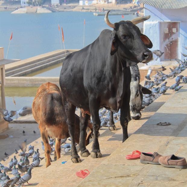 Pushkar IMG_4083-1
