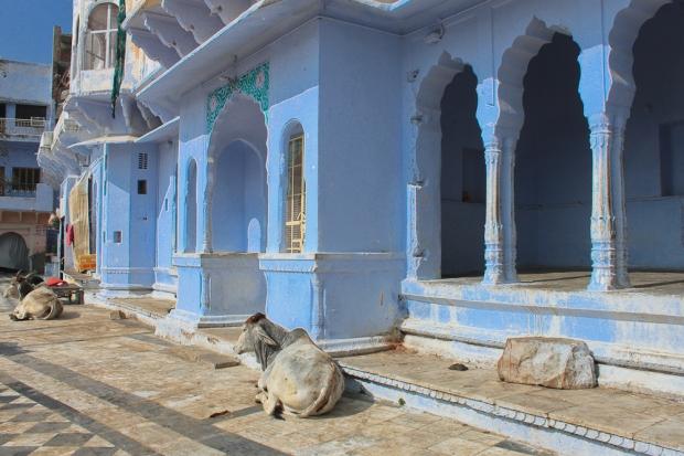 Pushkar IMG_4120-1