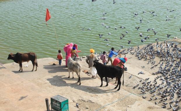 Pushkar IMG_4148-1