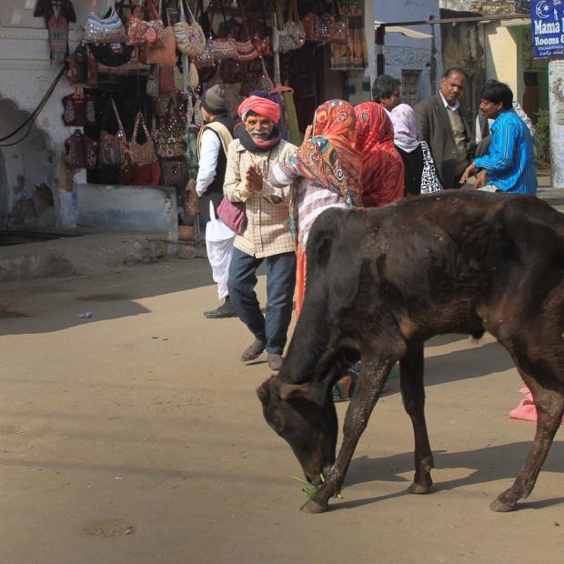 Pushkar IMG_4178-1