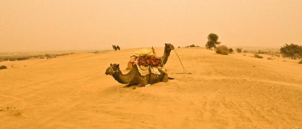 Kamel dans le désert du Thar