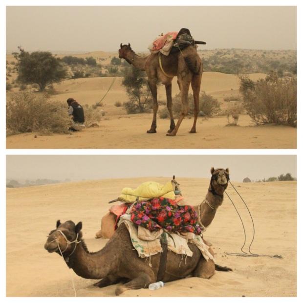 Kamel 2