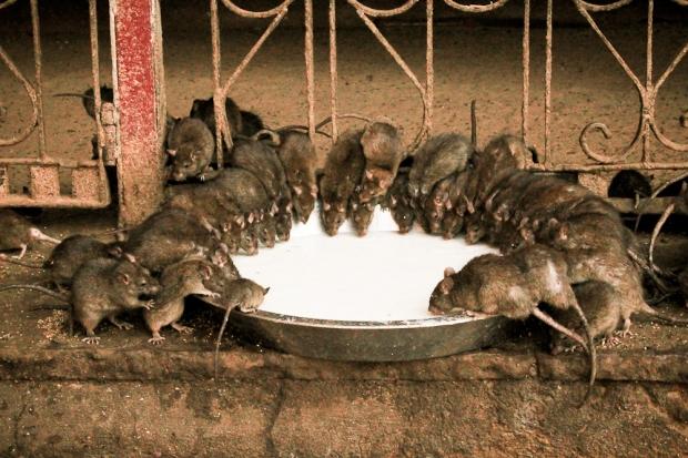 Repas dégustation IMG_0799-1-2