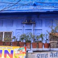 Jodhpur, un trésor bleu dans le désert