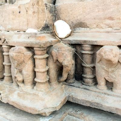 Elephants IMG_9101-1
