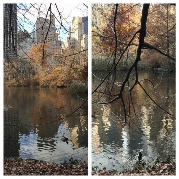 Central Park 12
