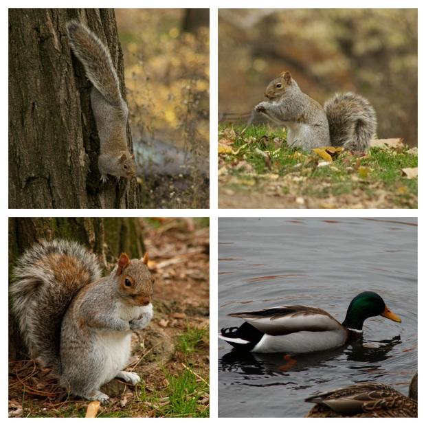 Les écureuils de Central Park ne sont  pas tristes le lundi .