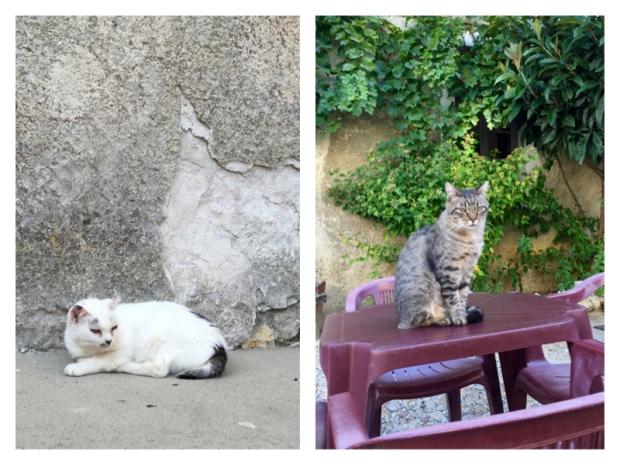 Chartreuse de Valbonne 16 Les chats