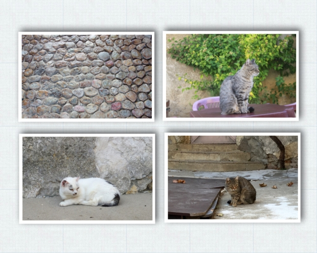 Chartreuse de Valbonne 32. Cats