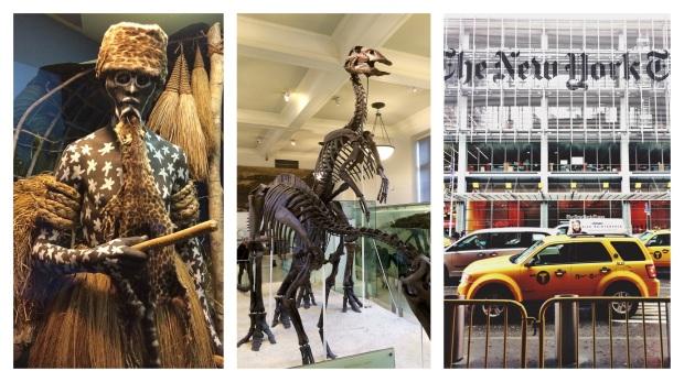 Musée d'histoire naturelle et façade du New York Times