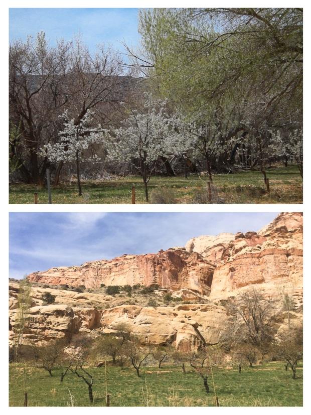 De Moab à Torrey 3.jpg