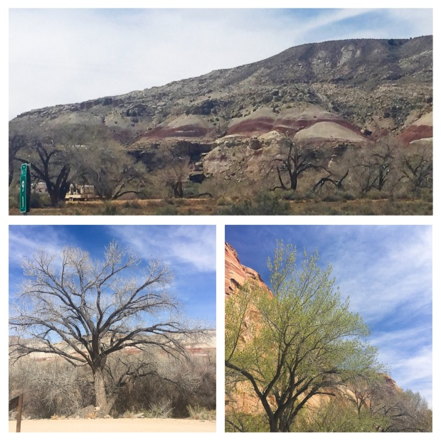 De Moab à Torrey 7.jpg