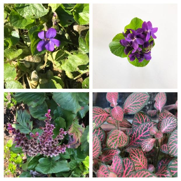 Garden Printemps 2017 1.jpg