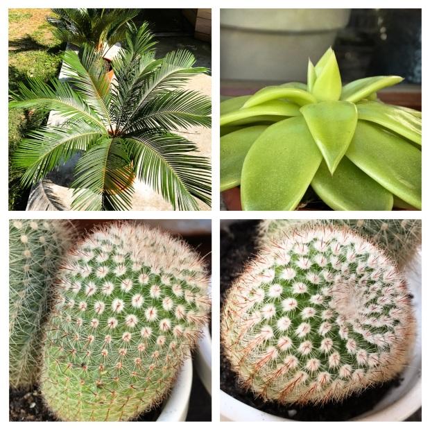 Garden Printemps 2017 Cactus.jpg