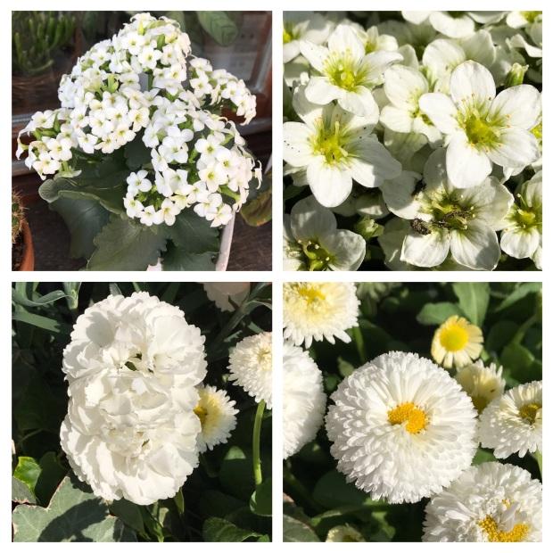 Garden Printemps 2017 White.jpg