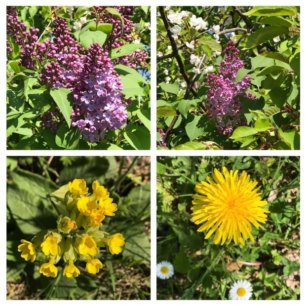 Springtime 1.jpg