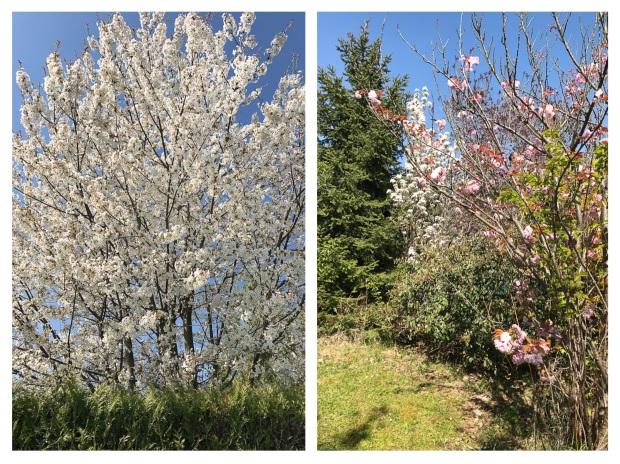 Springtime 10.jpg