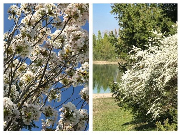 Springtime 11.jpg