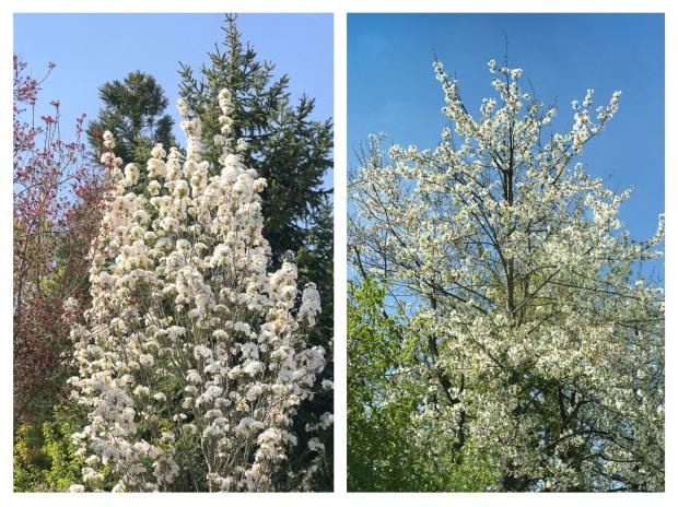 Springtime 12.jpg