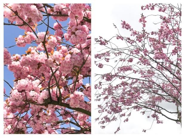 Springtime 15.jpg