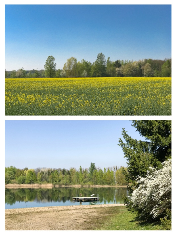 Springtime 16.jpg