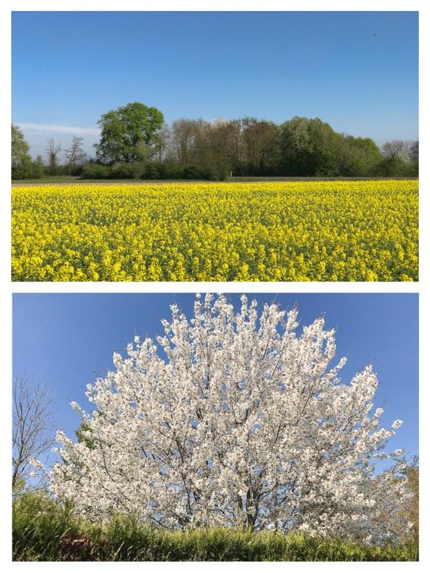 Springtime 17.jpg
