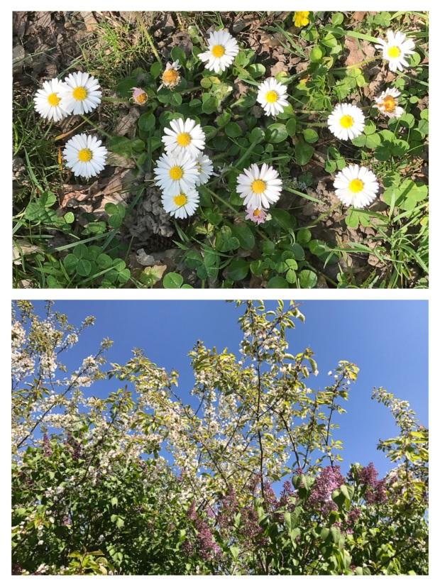 Springtime 18.jpg