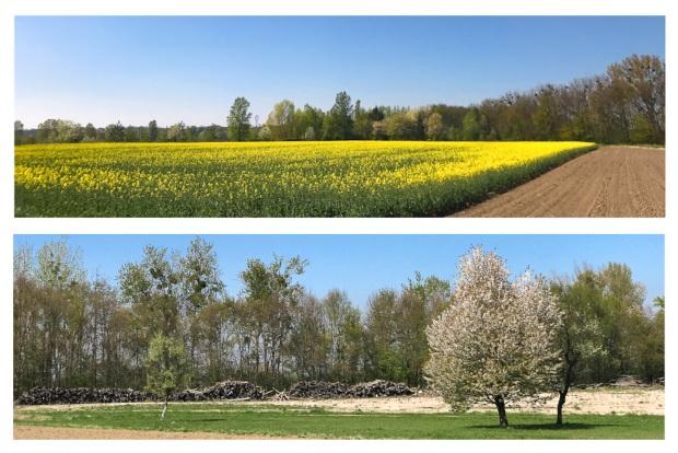 Springtime 19.jpg