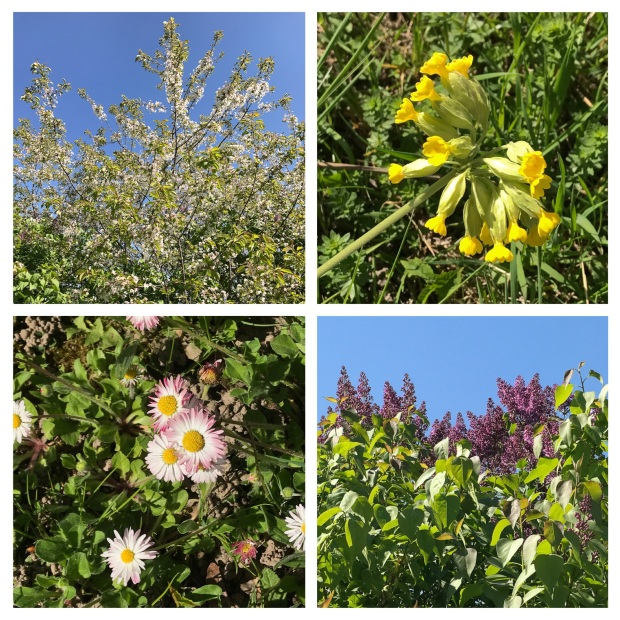 Springtime 2.jpg