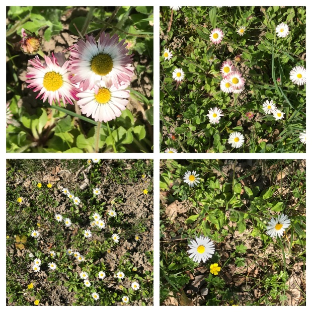 Springtime 3.jpg