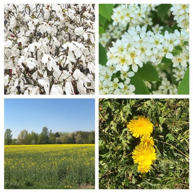 Springtime 7.jpg