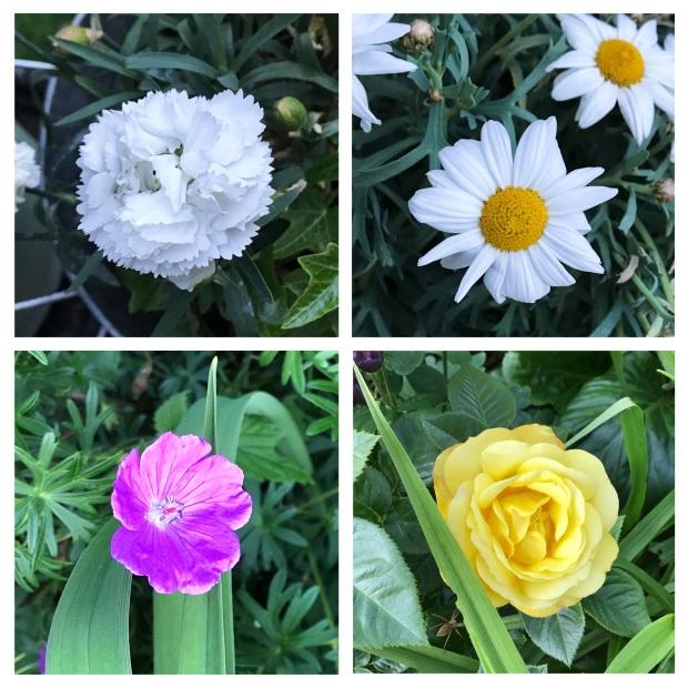 Fleurs de mai 2.jpg